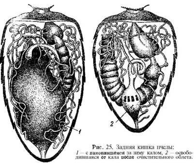 сравнение виагры сиалиса и левитры