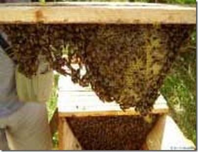 Лонин И С Пчеловодство Со Самосменой Матки